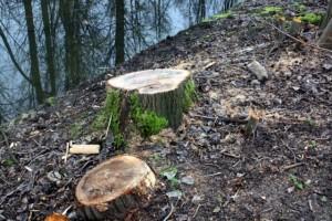 Bomenkap Vosbergenpad
