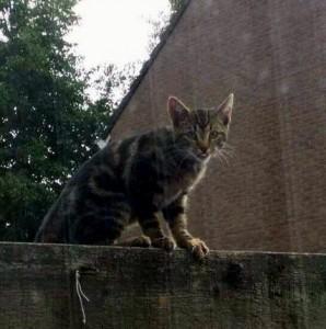 Foto van de Kitten