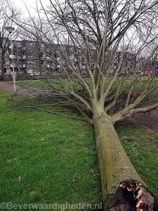 Omgevallen boom park Schinnenbaan