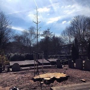 Gekapte rode Beuk, begraafplaats Oud IJsselmonde