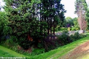 Zicht begraafplaats Beverwaardseweg